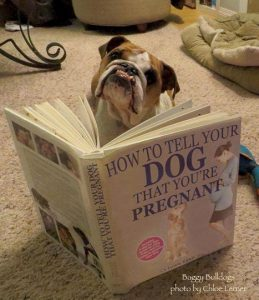 Dog reading 'How to tell your dog you're pregnant' pregnancy announcement pic