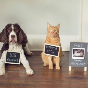Cat and Dog announcing pregnancy