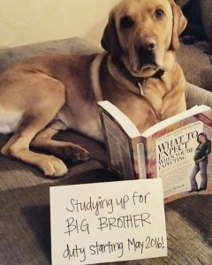 dog reading 'what to expect when you're expecting' pregnancy announcement